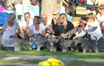 Breeding group BEST IN SHOW-2 at Swedish Kennel Club National Show, Öland Sept 8th, 2013.