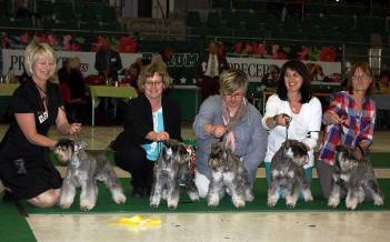 BEST IN SHOW 3 at the Swedish Kennel Club Show in Västerås 2012-04-28