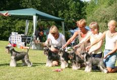 BEST IN SHOW at SSPK's show in Stockhlom 2011-06-11