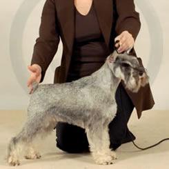 Hazelnut de Trufas Negras Swedish Champion - Hund 2008